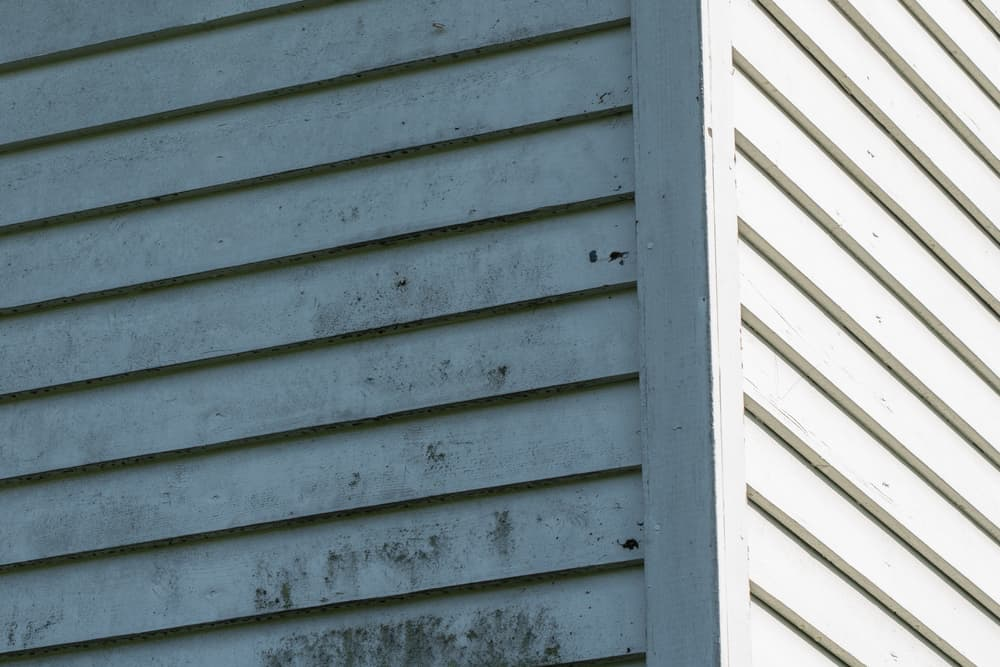 5 Simple Steps to Remove Green Algae from Vinyl Siding