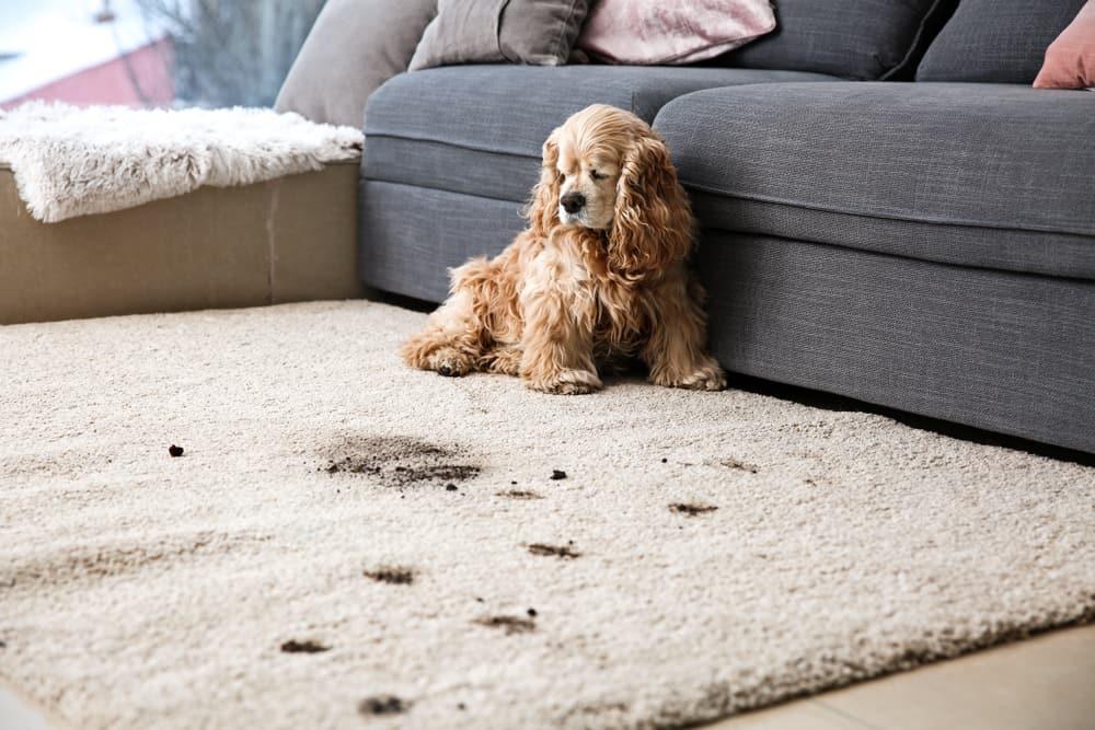 Carpet vs. Vinyl Flooring
